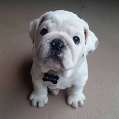 Cutie pie!!!