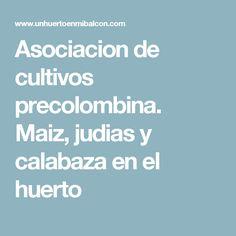 Asociacion de cultivos precolombina. Maiz, judias y calabaza en el huerto