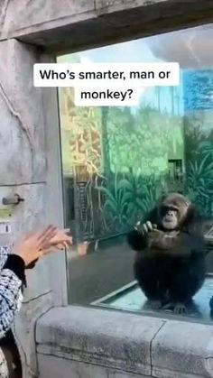 Cute Little Animals, Cute Funny Animals, Funny Cute, Funny Animal Memes, Funny Animal Pictures, Animal Antics, Primate, Cute Animal Videos, Funny Video Memes