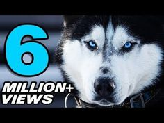 (adsbygoogle = window.adsbygoogle || []).push();       (adsbygoogle = window.adsbygoogle || []).push();  [vid_description] Likes: 30662 Viewed: 6276600 source TOP 10 EXPENSIVE DOGS the best #luxury #homes  Honor the Lord with your wealth, with the firstfruits of all your crops;...