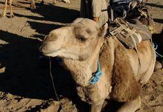 grumpy camel travel blog