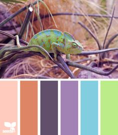 color chameleon -- looking good, buddy!  If you ave to be in the lizard family, this is the way to go!!