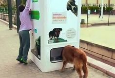 In Istanbul, there's a vending machine that feeds stray dogs in exchange for recycled bottles. Wow Facts, Weird Facts, Homeless Dogs, Homeless People, Mind Blowing Facts, Recycled Bottles, Plastic Bottles, Save The Planet, Stray Dog