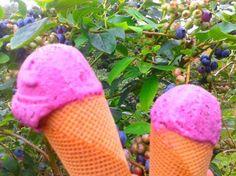 mmmm helados caseros con arándanos, deliciosos! a ver si sacamos un hueco y compartimos la receta  #hotelruralAsturias #hotelrural #hotelconencanto #habitacionesconvistas #turismoasturias #vacaciones #verano2014 #asturiasven #asturiasparaísonatural
