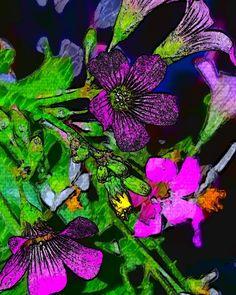 'colormepretty' by cherylt | Foap photo