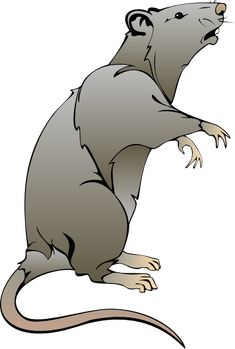 Cartoon Rat Drawings | rat clip art
