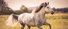 Stoffwechsel Pferd