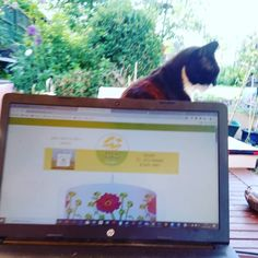 Working in the garden updating my webpage and sending out a newsletter but I just couldn't be in the studio even if it has French doors into the garden today! My 'shadow' Butler (one of three rescue cats) who are my joys is constantly with me, has been leaning against my laptop, and snoring all afternoon, it's not fair! 😹. . .my website is www.elainecollinsdesigns.com. Join my 'Besties' tribe by subscribing and get an instant 10% discount on everything! And find out by my occasional…