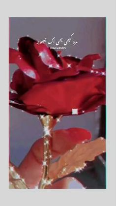 Bilkul 💯🙂 Country Song Lyrics, Romantic Song Lyrics, Best Love Lyrics, Love Songs Lyrics, Cute Love Songs, Beautiful Songs, Cute Love Couple, Cute Couple Videos, Dad Love Quotes