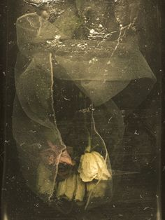 """timleeart: """" Spring 3 by Tim Lee """" Robert Frank, My Flower, Flower Art, Southern Gothic, Photocollage, Henri Matisse, Art Photography, Artsy, Drawings"""