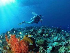 Yapak is actually a wall dive divided into four different dives located in the northwestern tip of the Boracay Island right beside the Punta Bunga dive site. Learn To Scuba Dive, Scuba Diving Quotes, Destinations, Life List, Before I Die, Great Barrier Reef, Oh The Places You'll Go, Snorkeling, Bucket