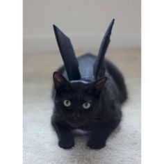 3080 Best Black Cats Rule Images Crazy Kittens