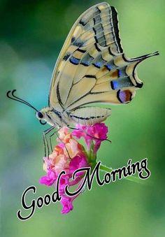 Good Morning Photos, Good Morning Wishes, Guru Nanak Photo, Morning Quotes, Animals, God, Night, Buen Dia, Messages