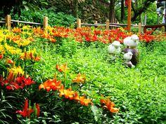꽃새미 마을