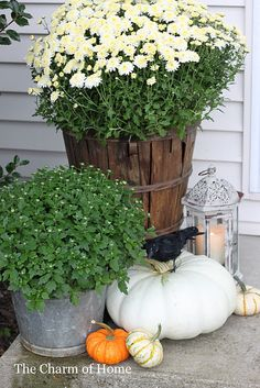 try grouping white mum, white pumpkin & green & white flowering kale