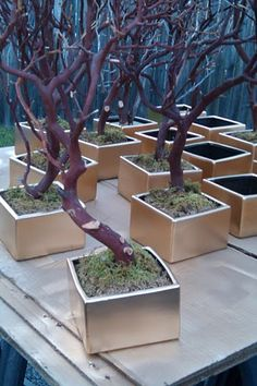 Manzanita centerpieces- this is how i want the base to look--gold