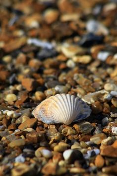 shell and pebbles