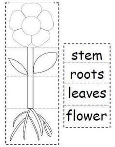 Learning About The Parts of a Plant | Plant activities for Master ...