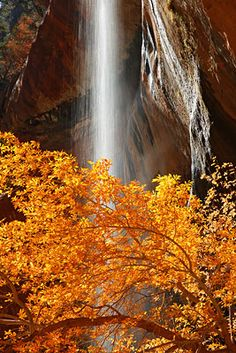 Emerald Pools, Zion National Park, Utah; photo by Ron Niebrugge
