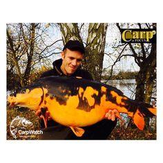 Beautiful orange and black Koi carp #barbelfishing #barbel #carpfishing #carp #koi #koicarp #fishing #foxinternational #korum #specialistfishing #grauvell #colmic #grauvellfishing #polefishing #barbo #barbocomizo #barbogitano #feederfishing #floatfishing #amazingfish