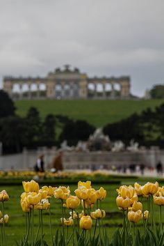 Schonbrunn Palace and Gardens - Vienna, Austria