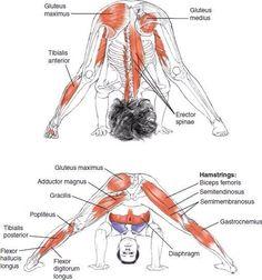 Enjoy The Amazing Ashtanga Yoga Practice - Yoga breathing Yoga Ashtanga, Yoga Iyengar, Bikram Yoga, Fitness Workouts, Yoga Fitness, Asana, Yoga Meditation, Yoga Inspiration, Yoga Muscles