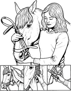 How to Bridle Horse