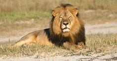 le lion est mort...