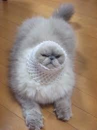 Risultati immagini per funny cat