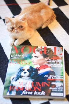 Know About the Famous Fashion Pets in Vogue