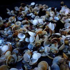 shell / Ocean von PERIARTWORK auf Etsy