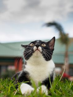 Little do people know it was a cat who alerted Dorothy and Toto to the ensuing tornado.
