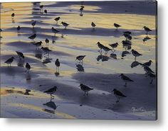 Sandpiper Sunset Convention Acrylic Print By Susan Molnar