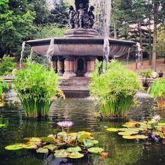 Nénuphars à la Fontaine Bethesda, (Central Park, New York) - Photo by kastororama