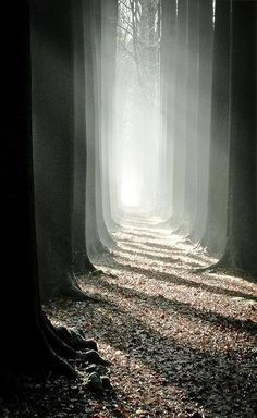 To walk in the Light. Le corridor de mon pére, by Bart Deburgh (j)