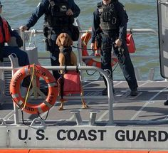 Most Beautiful Dog Breeds, Beautiful Dogs, Vizsla Dog, Hungarian Vizsla, Military Dogs, Dog Runs, Hunting Dogs, Coast Guard, Cousins