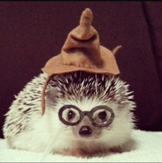 Cute hedgehog in his hat. Love the drawn on glasses! Happy Hedgehog, Hedgehog Pet, Cute Hedgehog, Cute Little Animals, Cute Funny Animals, Funny Cute, Cute Creatures, My Animal, Animals Beautiful