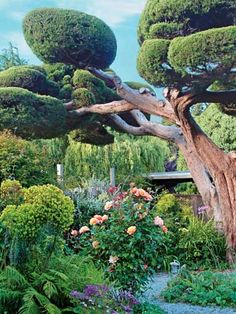 This wouldn't fit in my garden style but I do love the whimsical Dr.Suess look of it!