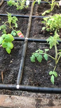 - Garden Grid irrigation system, Just turn a valve and it's time for a drink. Garden Our Garden Grid irrigation systems are ideal for getting the right amount of water for every plant. Backyard Vegetable Gardens, Veg Garden, Backyard Garden Design, Garden Boxes, Garden Landscaping, Modern Backyard, Garden Kids, Modern Pergola, Garden Edging