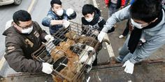 Yulin dog meat festival in pictures -