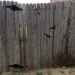 Before picture-Fence Gate-Rotted Wood, Broken Slats