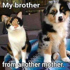 Gift card idea memes ridículos, cat memes, cat and dog memes Cat And Dog Memes, Funny Cats And Dogs, Funny Cat Memes, Funny Cat Videos, Cute Dogs, Funny Humor, Funny Kittens, 9gag Funny, Hilarious Sayings