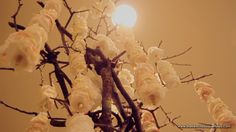 White Petals Strands on Tree Structure