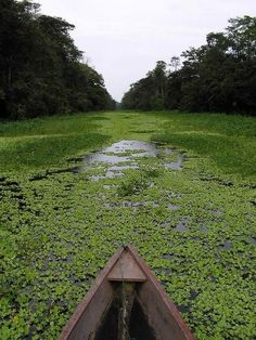 Amazon River, Brazil - This will be us in just a few days