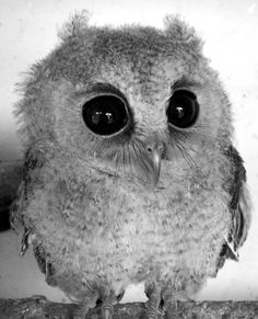 Cute little baby owl. Wonder if he comes in desaturated IRL?