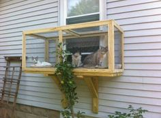 A neat idea for a sunroom for indoor cats or small dogs!