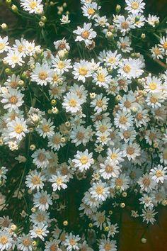 Soil And Water Conservation, Dry Sand, Garden Shrubs, Garden Plants, Hummingbird Garden, Weed Seeds, Black Eyed Susan, Flowers