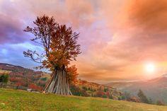 Vă urăm, de pe minunatele dealuri transilvănene, să aveţi o dimineaţă excelentă! <3 :D