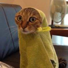 Kitty has wares if you have treats.More Cute Cats Funny Animal Pictures, Cute Funny Animals, Cute Cats, Funny Cats, Kittens Cutest, Cats And Kittens, Animals And Pets, Baby Animals, Beautiful Cats