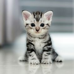 Unusual Cats, Beautiful Kitten, - Cat Food For Kidney Disease, Fluffy Kitty. Cute Baby Cats, Cute Cats And Kittens, Cute Baby Animals, Kittens Cutest, I Love Cats, Animals And Pets, Fluffy Animals, Boy Cat Names, Photo Chat